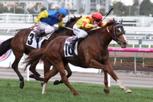 Palentino, yellow and red colours, proves too strong for stablemate Black Heart Bart, blue and yellow colours, to win the Makybe Diva Stakes at Flemington. Photo by Ultimate Racing Photos.