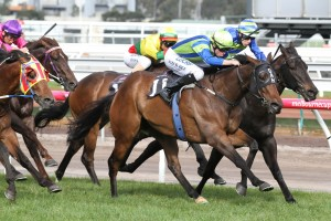 Churchill Dancer, green and blue colours, scores a narrow win in the Bobby Lewis Quality at Flemington. Photo by Ultimate Racing Photos.