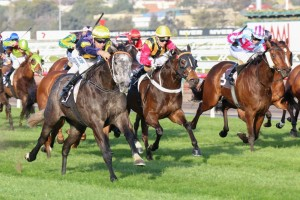Chautauqua (outside) and Temple of Boom (centre) will face off in the Gilgai Stakes at Flemington.