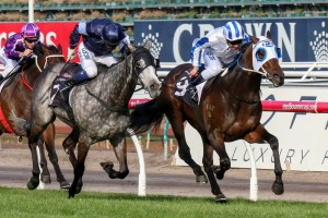 Makybe Diva Stakes betting at Ladbrokes
