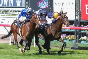 Merion (inside) will target the Group 1 Australian Guineas during the autumn.