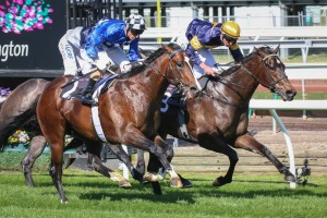 Chivalry (outside) could take out the bonus $250k if he wins both the Caulfield Guineas and Classic.