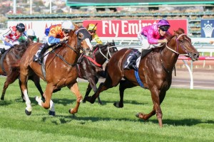 Rich Enuff (inside) and Looks Like The Cat (outside) will battle it out again in the Caulfield Guineas Prelude.