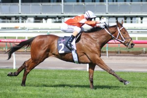 Who Shot Thebarman is our tip to win Saturday's 2016 Group 1 The Metropolitan at Randwick. Photo: Race Horse Photos Australia