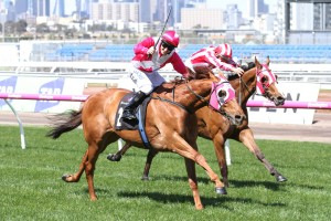 Manikato Stakes On The Agenda For Gilgai Stakes Winner The Quarterback