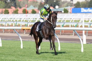 Lucia Valentina has been confirmed in the 2015 Tramway Handicap final field. Photo: Race Horse Photos Australia