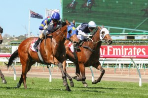Magicool offers great value for money in early 2015 SA Derby betting markets. Photo: Race Horse Photos Australia