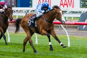 Risen From Doubt has been confirmed to line up for the 2014 Todman Stakes this weekend