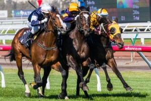 Trainer Mike Moroney has revealed Araldo (centre) will target the 2014 Melbourne Cup