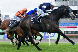 Fawkner  will attempt to win over 2,400 metres for the first time in the 2013 Caulfield Cup.