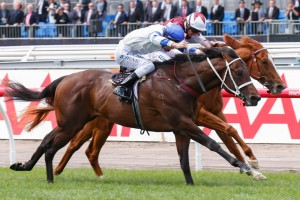 Kermadec displayed a keen turn of foot to run down Stratum Star in the 2014 Carbine Club Stakes. Photo: Sarah Ebbett