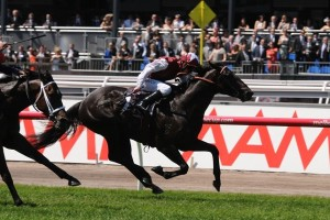 Paximadia winning the 2013 Carbine Club Stakes.