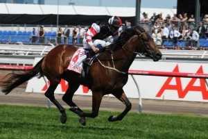 Trainer Robbie Laing is confident Polanski will perform in the 2014 Australian Guineas