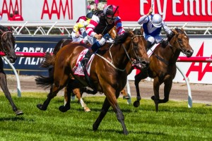 Polanski is unlikely to line up in the CS Hayes Stakes at Flemington on Saturday