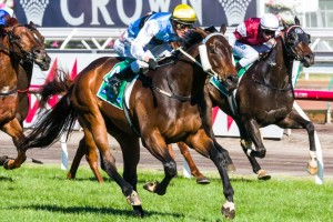 Black Heart Bart may get the chance to take on the likes of Smokin' Joey in the 2014 Railway Stakes at Ascot next Saturday. Photo by: Race Horse Photos Australia