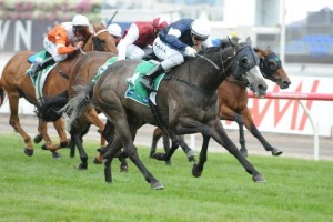 Fawkner will be the only representative from the Macedon Lodge stable in the 2013 Caulfield Cup.
