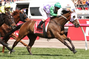 The 2016 Moonee Valley Cup will figure as the final point of call for Prince Of Penzance ahead of the Melbourne Cup. Photo: Ultimate Racing Photos
