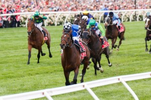 Melbourne Cup hero Protectionist has been confirmed in 2015 Caulfield Cup first acceptances. Photo: Sarah Ebbett