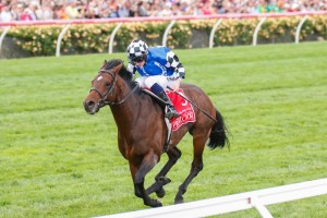 2014 Melbourne Cup winner Protectionist is already being geared towards a run in next year's race.
