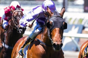 Bernabeu will be chasing a maiden victory at Group level in the 2014 Black Caviar Lightning Stakes