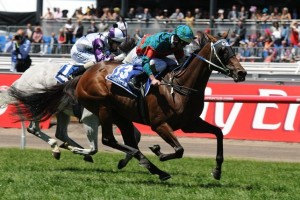 Plucky Belle is outright favourite in betting markets for the 2014 Sapphire Stakes