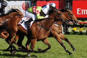 Richie's Vibe will be aiming for back-to-back victories when lining up for the 2014 Hareeba Stakes
