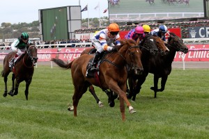 The Tony McEvoy trained Aspect, above, wins on debut in the Maribyrnong Plate at Flemington. Photo by Steve Hart.