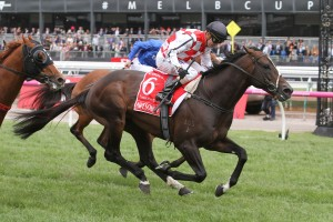 Dubai Turf the Target for Awesome Rock