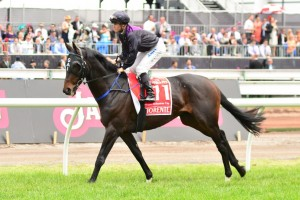 Fiorente Impressing Ahead of 2013 Melbourne Cup