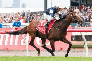 Green Moon Primed for 2014 Queen Elizabeth Stakes