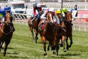 Onemorezeta (centre) is the market mover of the Light Fingers Stakes betting following a winning jumpout on February 2.