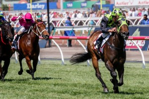 Vain Queen has taken out the 2014 G.H. Mumm Stakes in impressive fashion. Photo: Sarah Ebbett