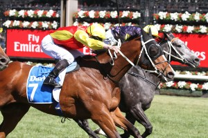 Delectation, red and yellow, knocks off the odds on favourite Chautauqua, the grey, to win the Darley Classic at Flemington. Photo by Ultimate Racing Photos.