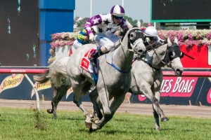 Arinosa is favourite to claim the 2014 Bellmaine Stakes