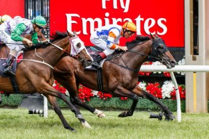 Le Roi scores an overdue win in the Queen Elizabeth Stakes at Flemington. Photo by Sarah Ebbett.