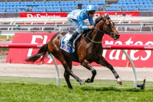 Prompt Return has what it takes to be a big player in the 2015 Blue Diamond Stakes.