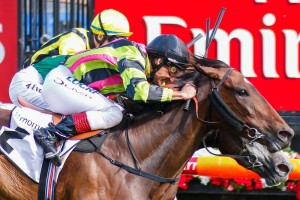Suavito scores a last stride win in the Momentum Energy Stakes at Flemington, Photo by Sarah Ebbett.