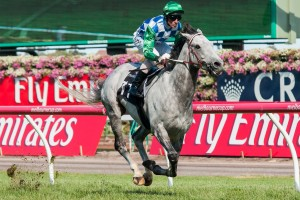 Puissance De Lune will be making his debut at Moonee Valley in the Group 1 Cox Plate on Saturday.