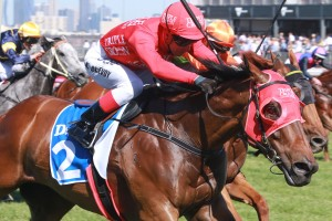 Ladbrokes Melbourne Autumn Racing Carnival Featured Horses - Redzel