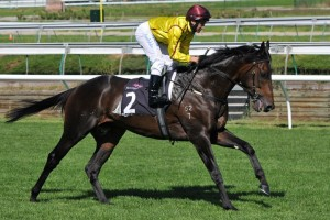Playing God is on the second line of betting for the 2013 Lee Steere Stakes.