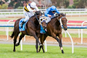 Ibicenco earnt a one kilogram penalty for the Melbourne Cup after his victory in the Group 3 Geelong Cup.