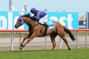 Mahuta will return to racing in Saturday's 2016 Bletchingly Stakes at Caulfield. Photo: Steve Hart