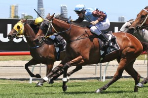 Centre Pivot is on track to follow Noisy Ocean (pictured) in winning the Magic Millions Stayers Cup in January.