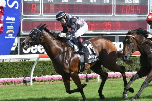 Weight Over Wet for 2017 Golden Slipper Bound Houtzen
