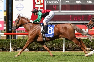 2015 Glenlogan Park Stakes Tips and Betting Update