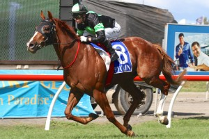 Sir Moments is the Races.com.au tip for Saturday's Listed Tails Stakes on the Sunshine Coast. Photo: Daniel Costello