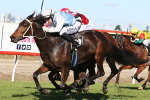 No Tricks scored a solid win in the Daybreak Lover at the Gold Coast. Photo by Daniel Costello.