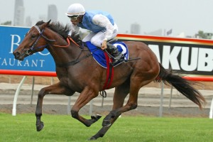 Mishani Honcho (pictured) is one of 14 rivals facing Real Good in the Racing Minister's 2YO Classic this Saturday.