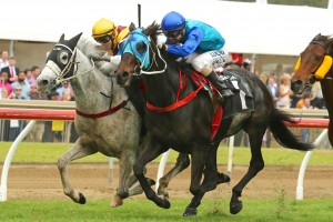 Danchai (inside) out-sprinted Banco Mo (outside) to win the 2015 Ipswich Cup. Photo: Daniel Costello