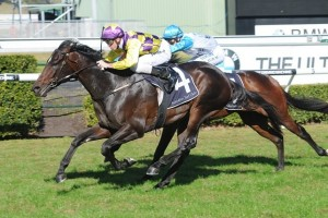 Paul Snowden is confident Blademeister can be competitive in the 2015 Frank Packer Plate. Photo: Steve Hart